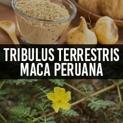 Tribulus Terrestris e Maca Peruana